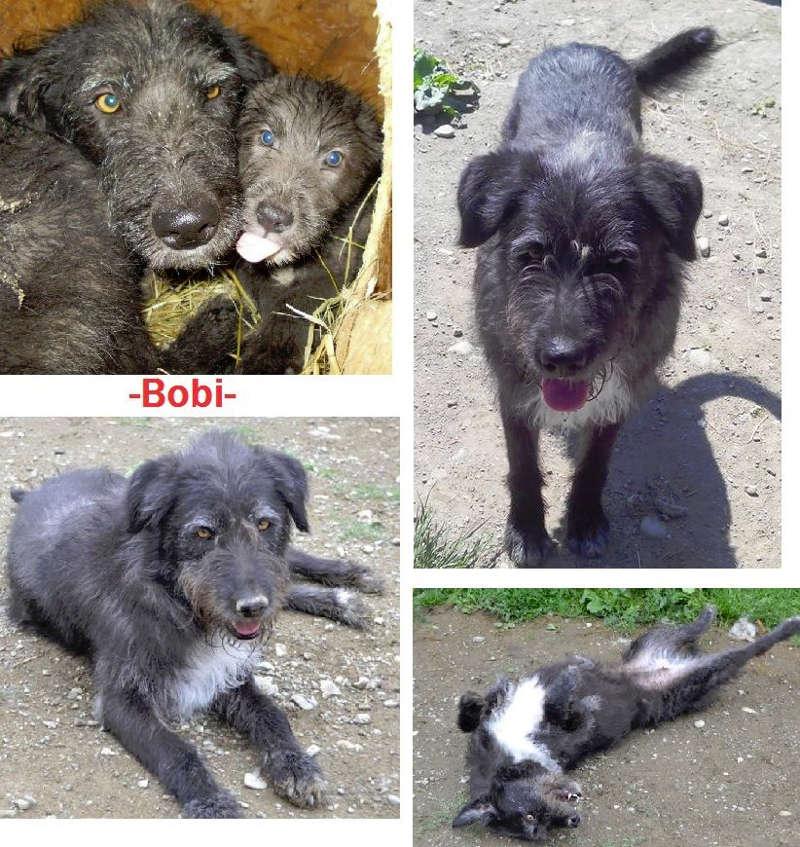 adoption-hunde-bobi-vermittlung