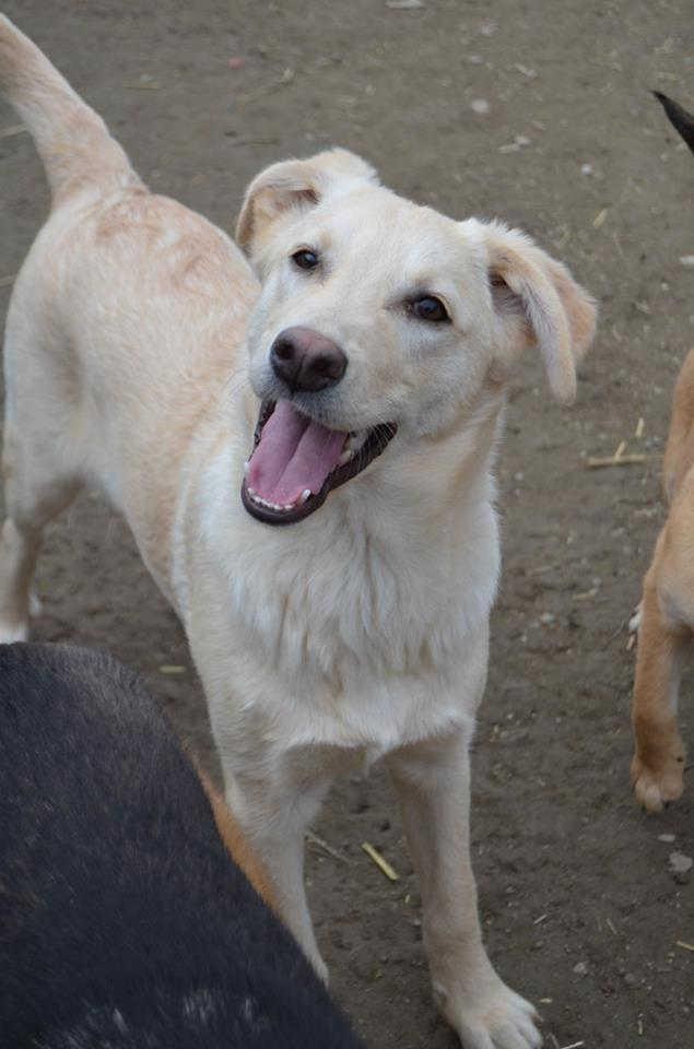 casper-hundevermittlung-rueden-014