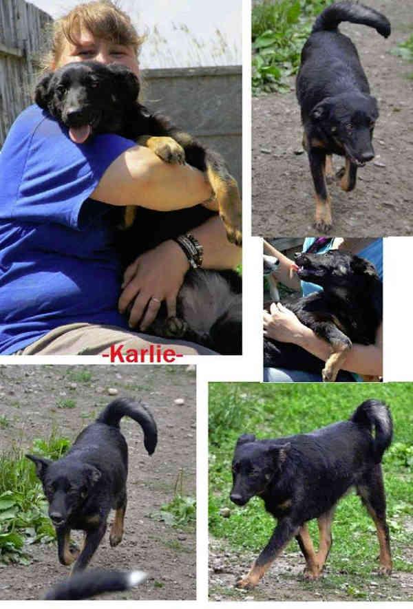 Hunde Hilfe Rum 228 Nien Vermittlung Adoptieren