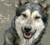 hunde-hilfe-rumaenien-greta-vor