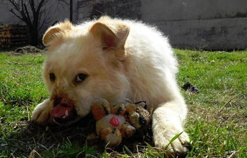 Misshandelte-Hunde