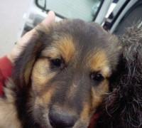 hunde-misshandelt-rumaenien-tara