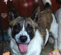 hundehilferumaenien-pearl