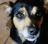 hundevermittlung-hilfe-tecky-vorschau