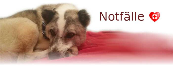 hundevermittlung-notfaelle