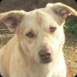 hundevermittlung-rueden-mallorca