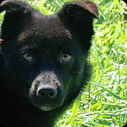 hundevermittlung-rueden-rumaenien