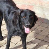 hundevermittlung-rumaenien-negro