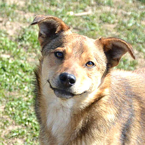 hundevermittlung-rumaenien-tao