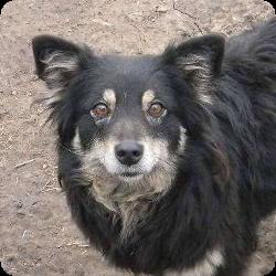 hundevermittlung-weibchen-mallorca