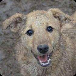 hundevermittlung-weibchen-rumaenien