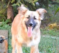 Tiere suchen ein Zuhause Luca