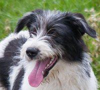 Thaila-Hundevermittlung-Vorschau