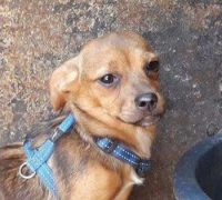 Baila-Hundevermittlung-Vorschau