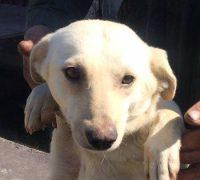 Hope-Vorschau-Hundevermittlung-Rumänien