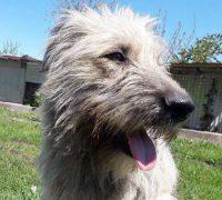 Luca-Vorschau-Hundevermittlung-Rumänien