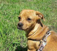 Marla-Vorschau-Hundevermittlung