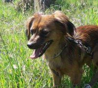 Mila-Vorschau-Hundevermittlung