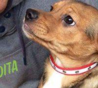 Perdita-Vorschau-Hundevermittlung-05