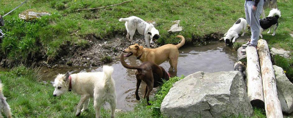 Animals new life e.V. Hundehilferumaenien   Hundevermittlung