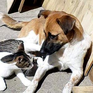 animals-new-life-valdo