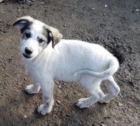 Hundevermittlung Carlos