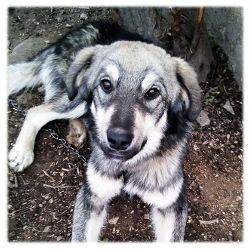 Hunde Bosnien Welpen