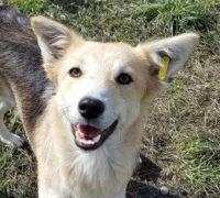 Shakira Animals new life Hundevermittlung