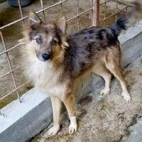hundevermittlung-rumaenien-foxy
