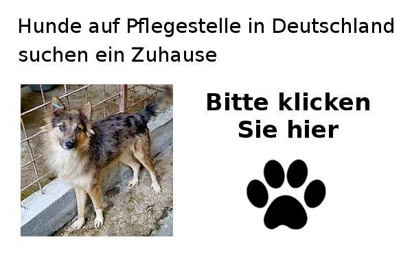 Hunde-suchen-ein-Zuhause