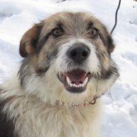 Teri-Vorschau-hundevermittlung