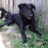 hundevermittlung-buddy