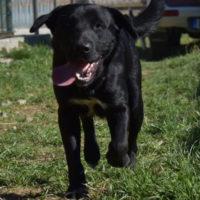 hundevermittlung-2019-odin