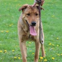 hundevermittlung-robin