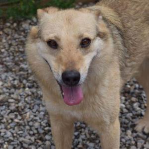 opal-hunde-suchen-ein-zuhause