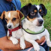 hunde-suchen-ein-zuhause-polly-diesel