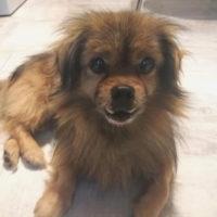 hundevermittlung-dintzu