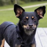 hundevermittlung-donald